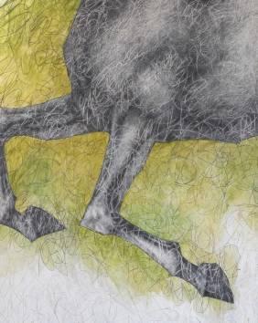 Horse - detail. 180 x 182 cmm. Acrylic and graphite pencil on wood.