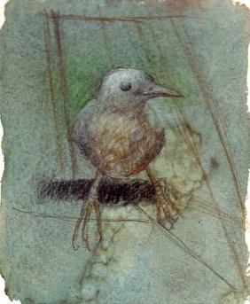 Study of bird.