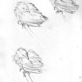 Bird study.