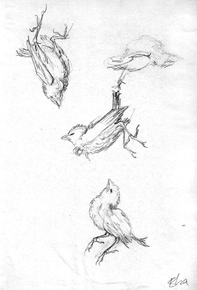 Dead bird study.